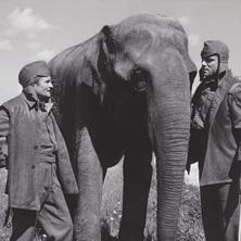 Hannibal Brooks - Abenteuer, Kriegsfilm / FSK: ab 14 J. / 110 min.